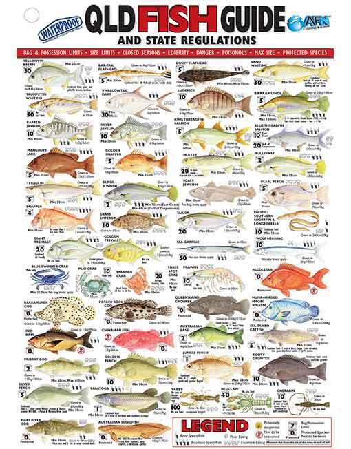 AFN QUEENSLAND FISH ID CARD (QLD)