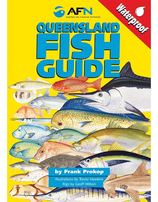 queensland fish id guide