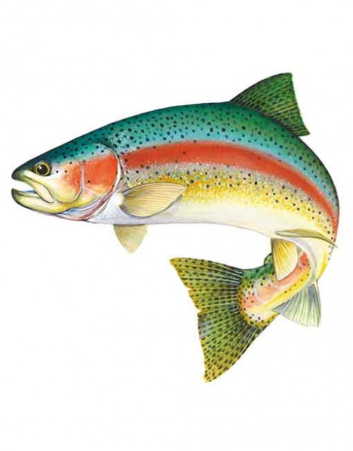 how to make rainbow trout