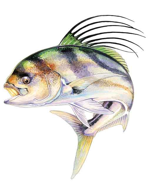 Roosterfish small