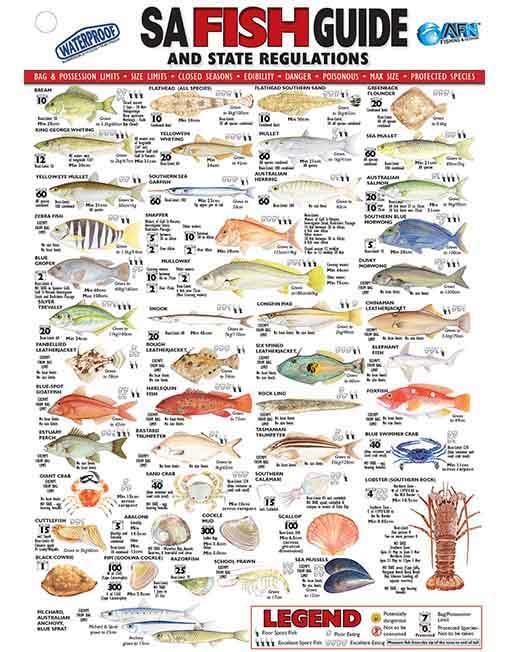 Afn south australia fish id card sa australian fishing for Idaho out of state fishing license
