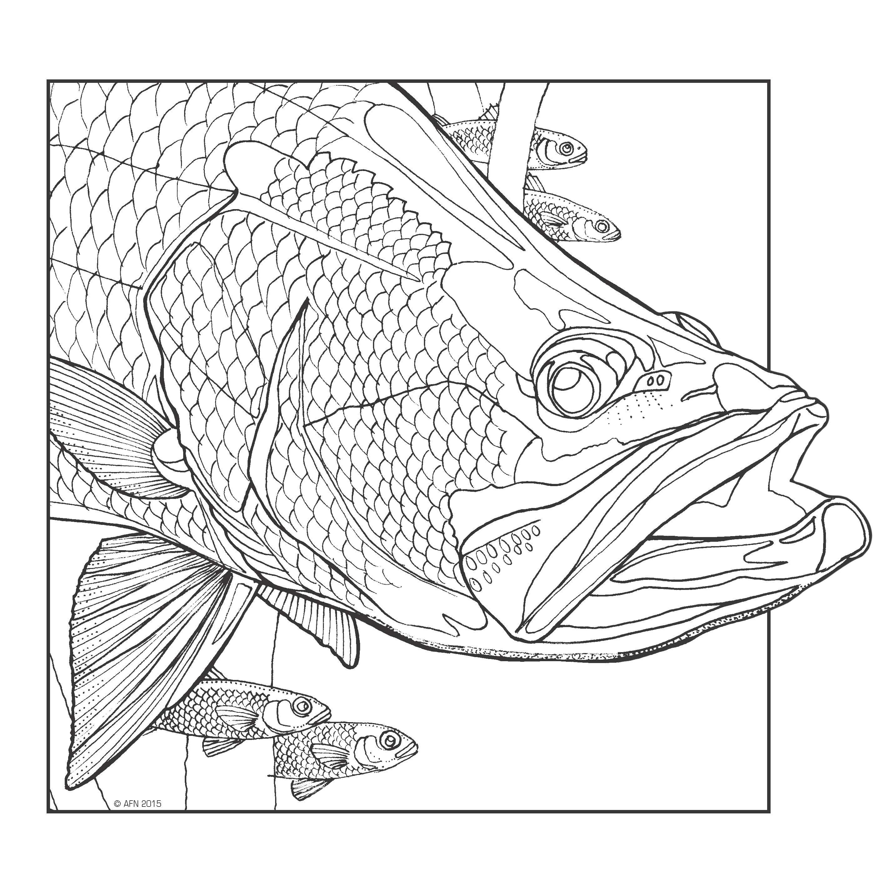 complexions of the aquatic adult colouring book 2 - Adult Coloring Books 2