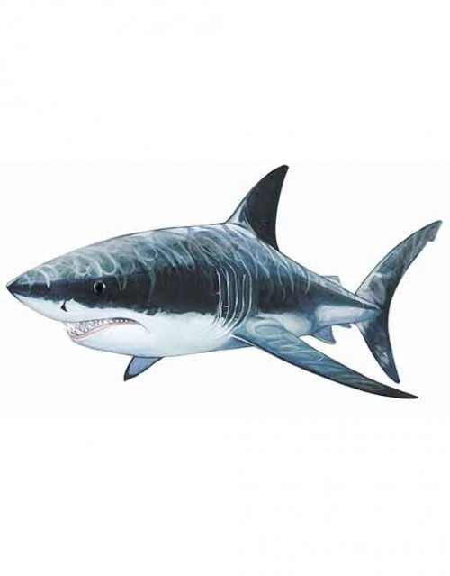White pointer shark WEB