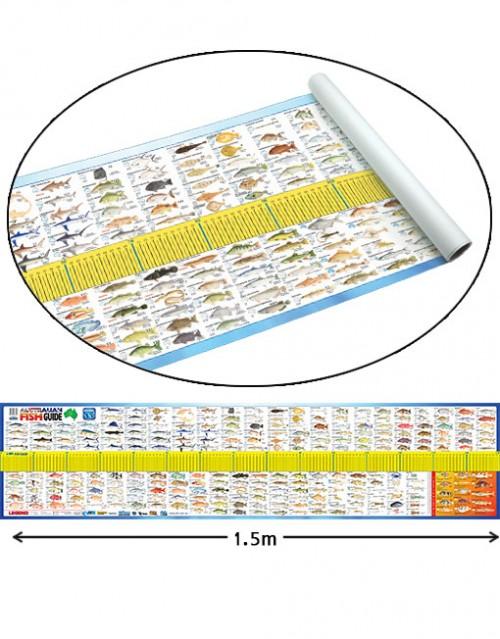 afn australian fish id maxi ruler
