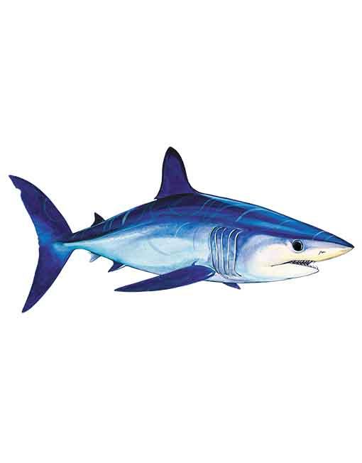 mako shark ST090