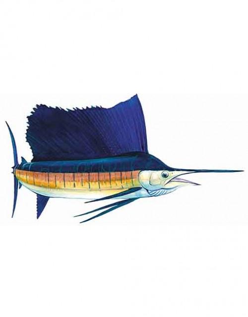 sailfish st013