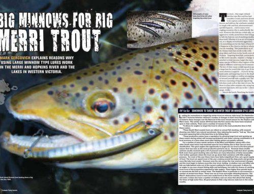 Big Minnows for Big Merri Trout
