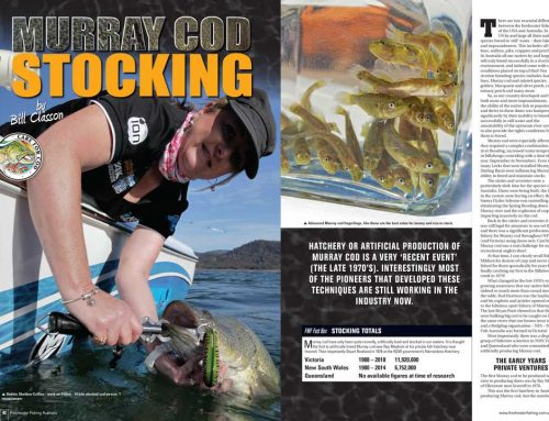 MURRAY COD STOCKING