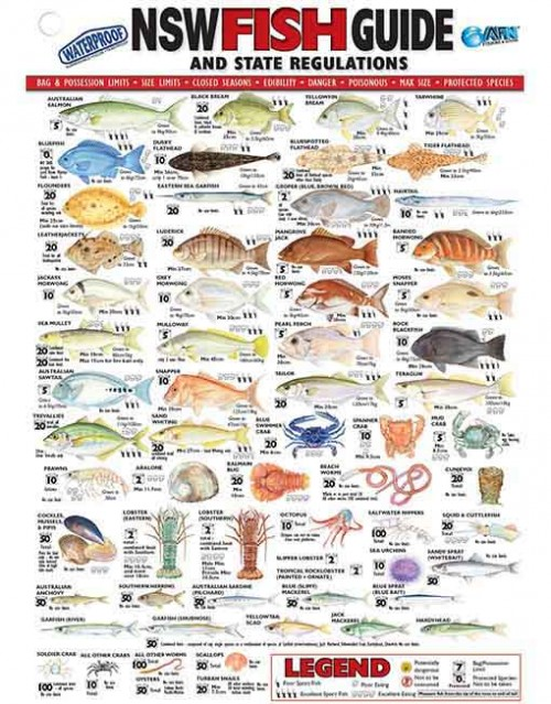 Fish ID RULERS